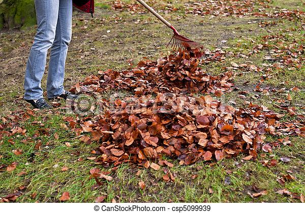 ratisser, leaves., enlever - csp5099939
