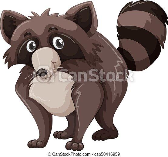 raton laveur, brun, fourrure - csp50416959