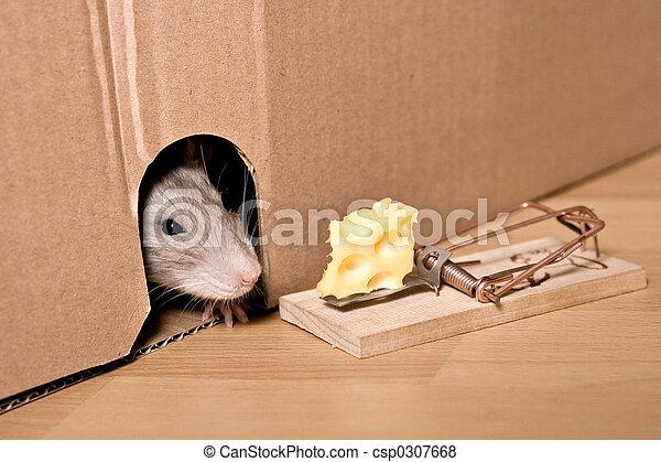 Rata, ratonera y queso - csp0307668