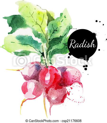 ravanello, leaf., mano, acquarello, disegnato, pittura - csp21176608