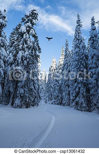 Raven above winter forest - csp13061432
