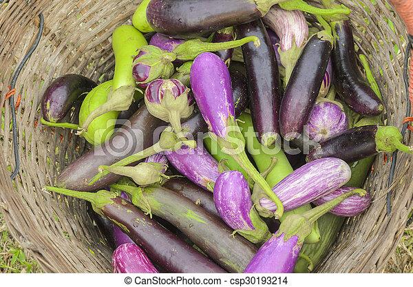 raw organic vegetables, eggplant - csp30193214
