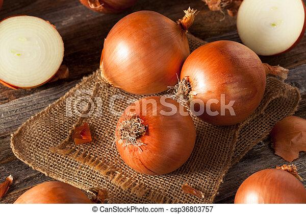 Raw Organic Yellow Onions - csp36803757