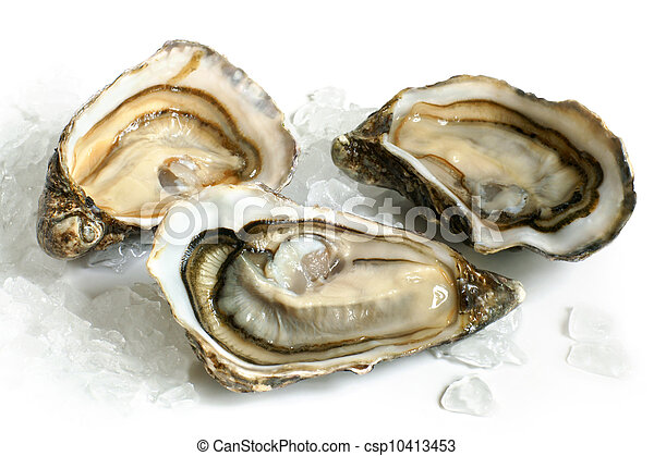 Raw oysters with ice  - csp10413453