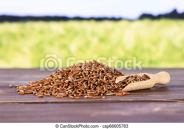 Raw red rice with field behind - csp66605763