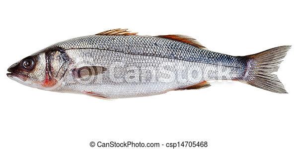 raw seabass fish - csp14705468