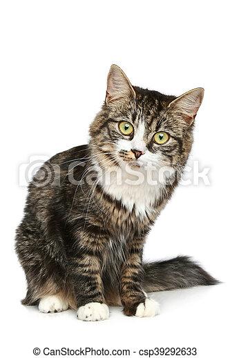 Un gatito desnudo se sienta en un fondo blanco - csp39292633