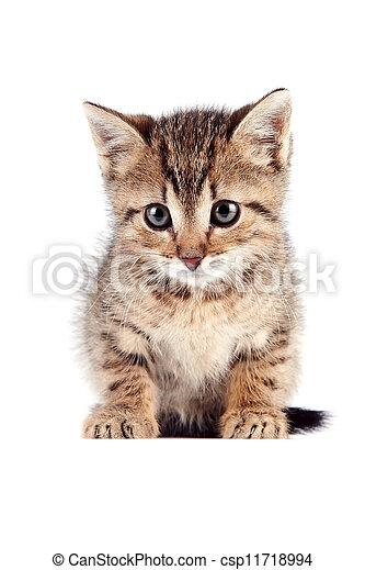 El gatito a rayas se sienta - csp11718994