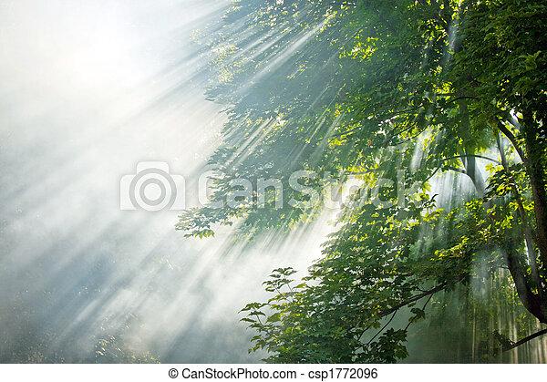 rayons, forêt, lumière soleil - csp1772096