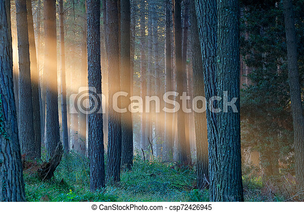 Rays of sunlight in a forest - csp72426945