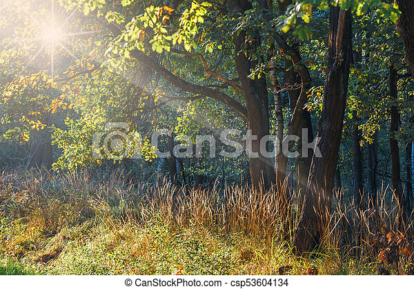 rays of sunlight in the green forest - csp53604134