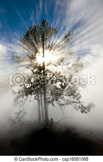 Rays of Sunlight in Yellowstone National Park - csp16081068