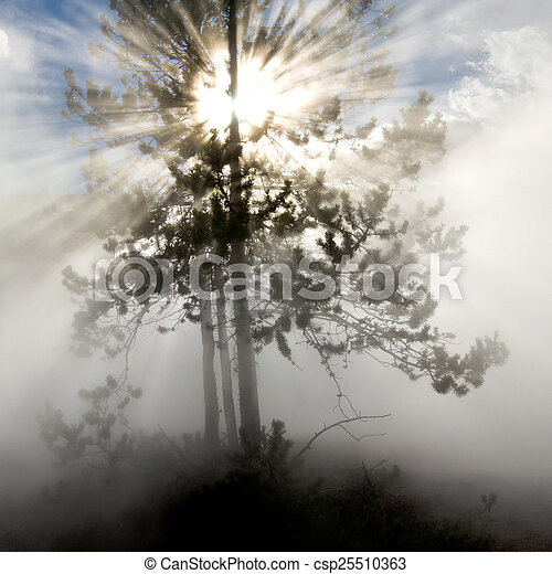Rays of Sunlight in Yellowstone National Park - csp25510363