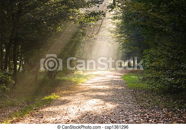Rays of sunlight on the path - csp1361296