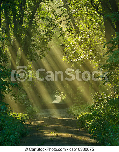 Rays of sunlight - csp10330675