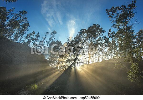 Rays of the Sun - csp50455099