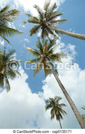 reach for the sky - csp0135171