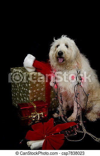 Ready For Christmas Dog - csp7838023