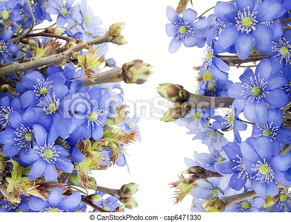Real first european springs flowers first blue wild woods european real first european springs flowers csp6471330 mightylinksfo