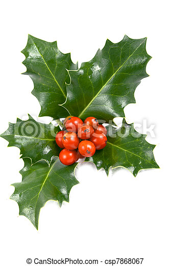 Real holly berries and leave  - csp7868067