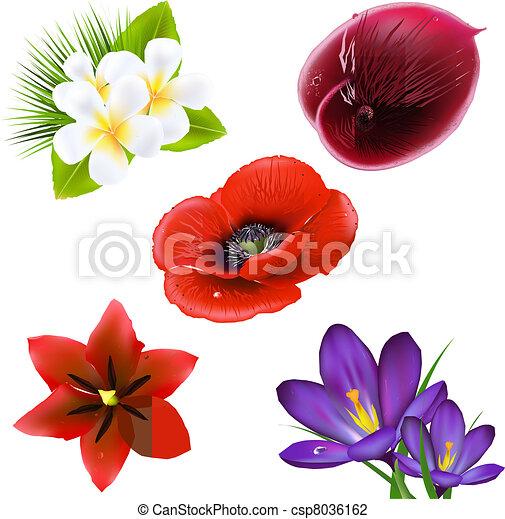 Realista Flores Conjunto Conjunto Aislado Ilustracion Flores