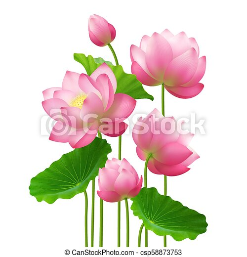 Realistic bunch lotus flowers bunch of beautiful lotus flowers with realistic bunch lotus flowers csp58873753 mightylinksfo