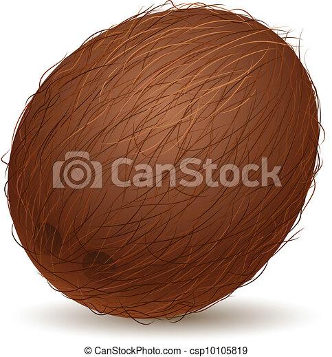 Realistic coconut - csp10105819