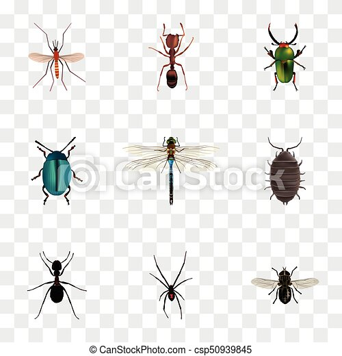 Realistic Emmet, Gnat, Damselfly And Other Vector Elements  Set Of Bug  Realistic Symbols Also Includes Bug, Spider, Dragonfly Objects