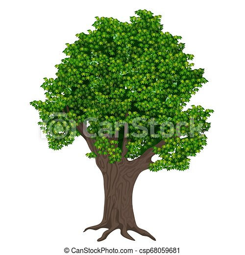 Realistic high detailed vector plant tree isolated. - csp68059681