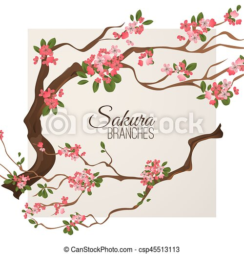 Realistic sakura japan cherry branch with blooming flowers vector illustration - csp45513113