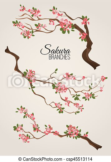 Realistic sakura japan cherry branch with blooming flowers vector illustration - csp45513114