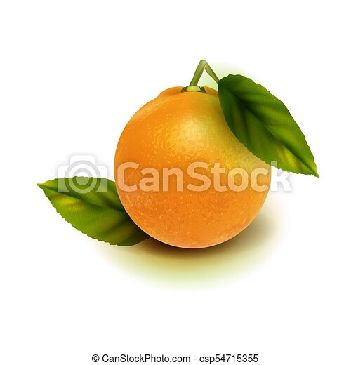 Realistic vector orange fruit isolate. Orange with leaves isolated on white. - csp54715355