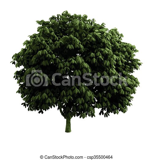 realistic vector tree isolated - csp35500464