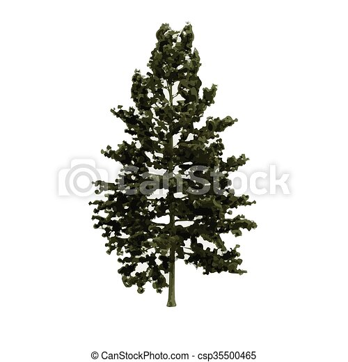 realistic vector tree isolated - csp35500465