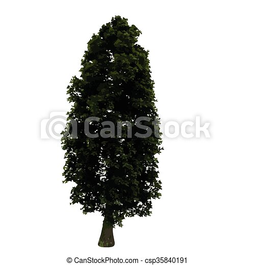 realistic vector tree isolated - csp35840191