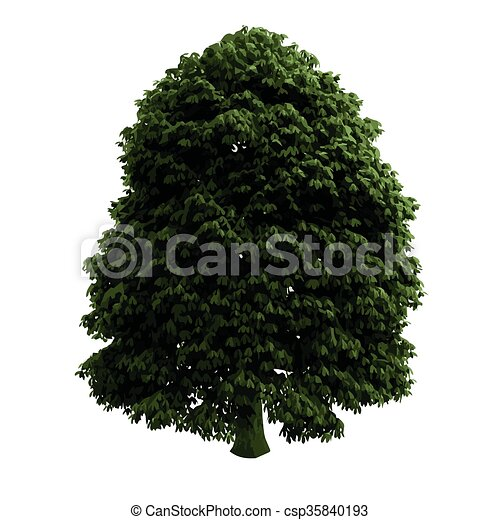 realistic vector tree isolated - csp35840193