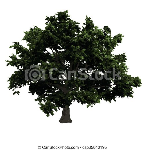 realistic vector tree isolated - csp35840195