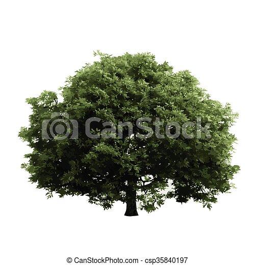 realistic vector tree isolated - csp35840197