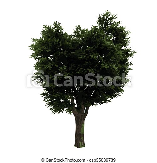 realistic vector tree isolated - csp35039739