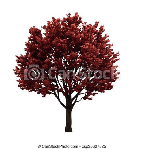 realistic vector tree isolated - csp35607525