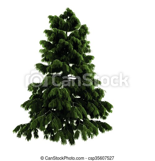 realistic vector tree isolated - csp35607527