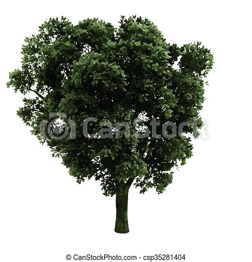 realistic vector tree isolated - csp35281404