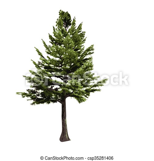 realistic vector tree isolated - csp35281406