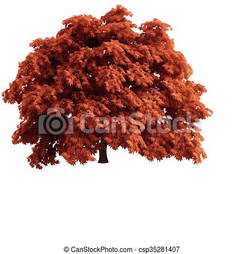 realistic vector tree isolated - csp35281407