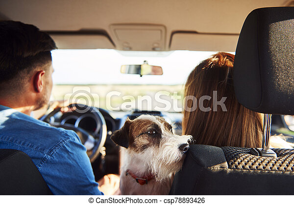 Rear view of young couple and dog in a car - csp78893426
