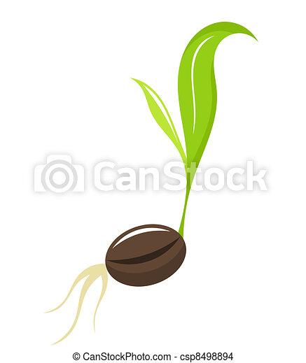 recem nascido, planta, -, seedling - csp8498894