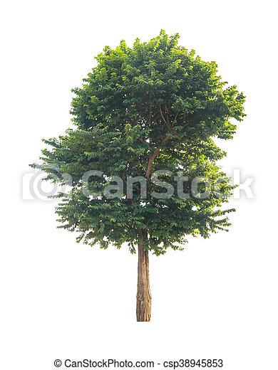 Árbol verde aislado en fondo blanco con camino de recorte - csp38945853