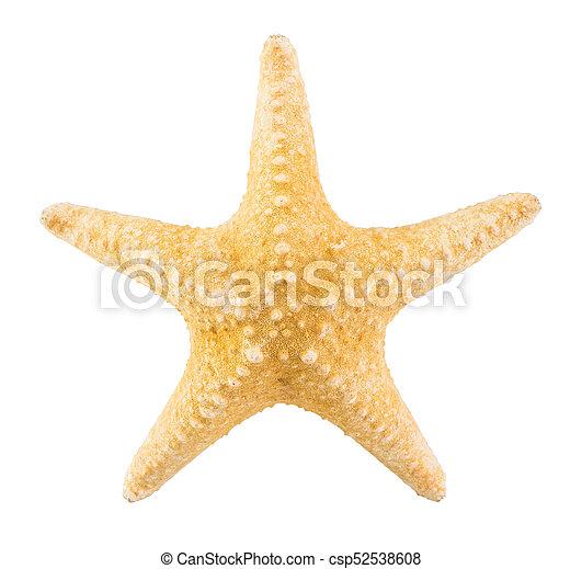 Estrellas de mar aisladas en fondo blanco con camino de recorte - csp52538608