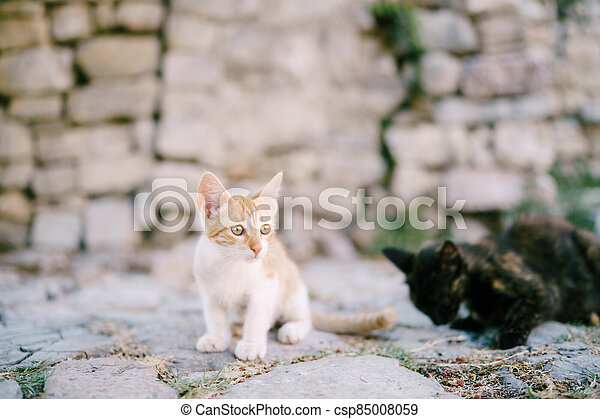 Red and black kittens on the pavement against the background of a stone wall. - csp85008059