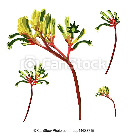f27e09708 Realistic red and green kangaroo paw flower vector elements on a ...